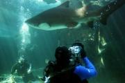 kapstadt-aquarium-001