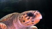kapstadt-aquarium-002