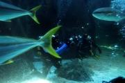 kapstadt-aquarium-004