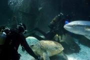 kapstadt-aquarium-005