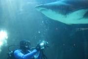 kapstadt-aquarium-006