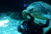 kapstadt-aquarium-008