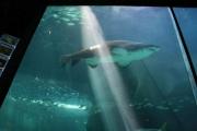 kapstadt-aquarium-010