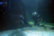 kapstadt-aquarium-012