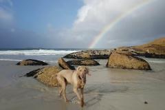 beach dog2