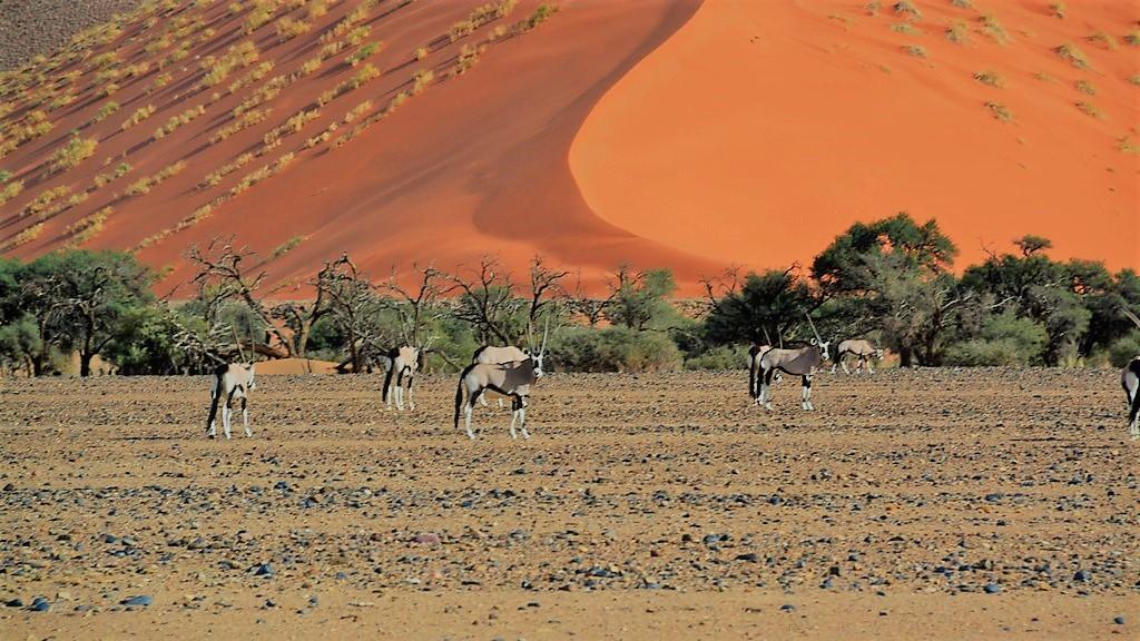 Antilopen in Namiba erleben mit den Reise Pionieren