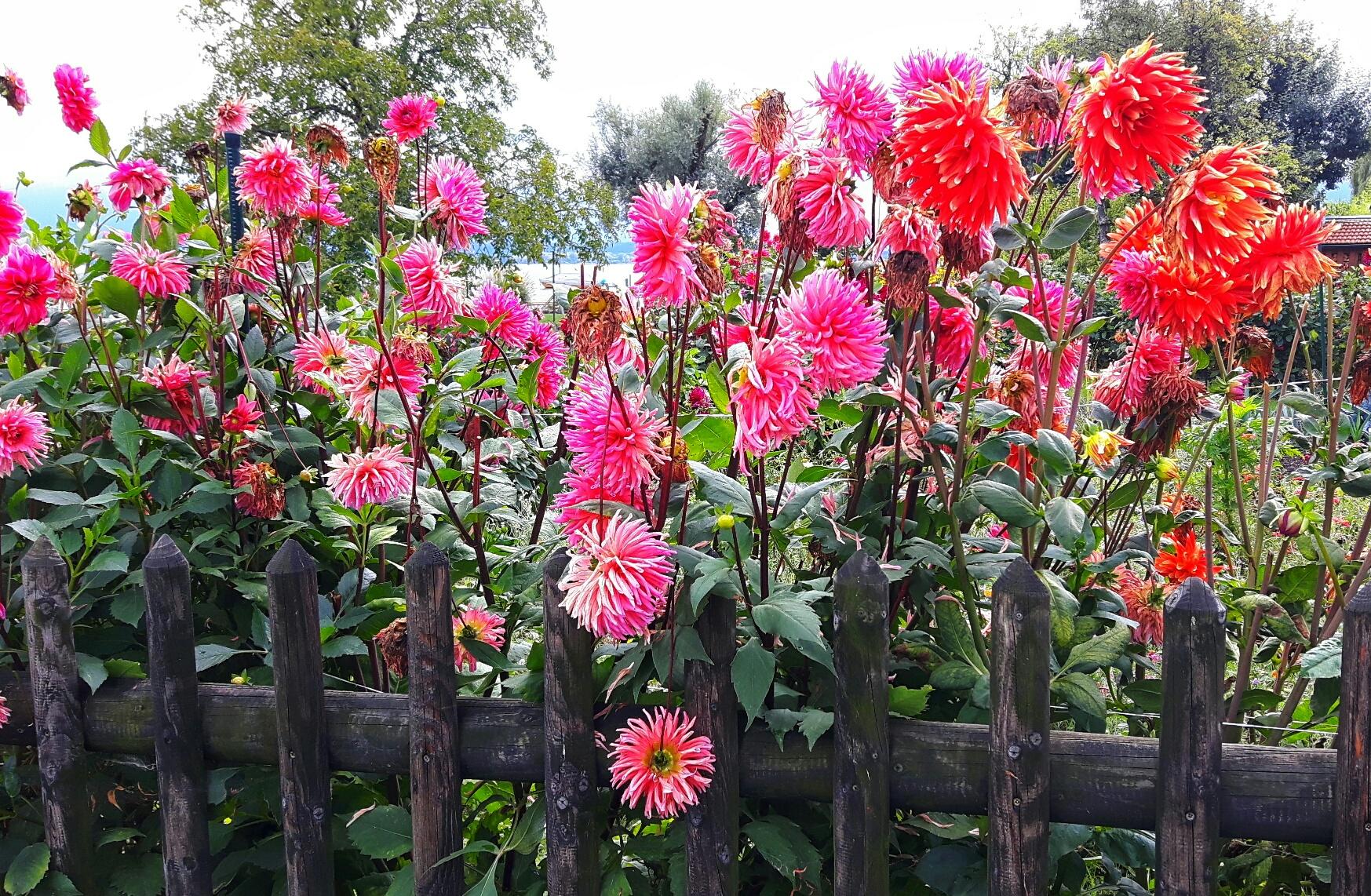 Blumen am Chiemsee