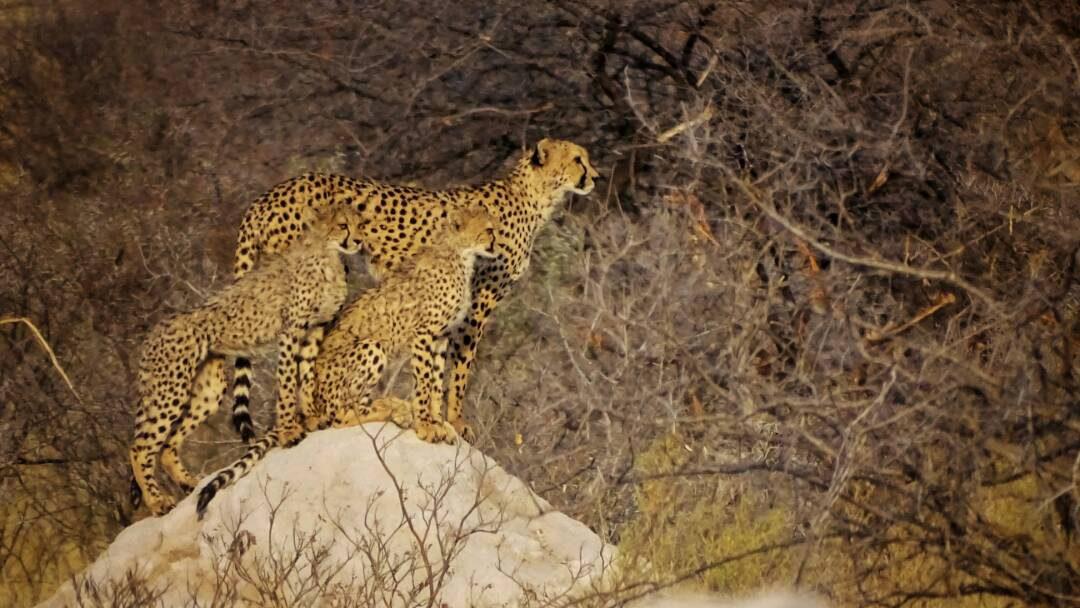Der Etosha Nationalpark in Namibia